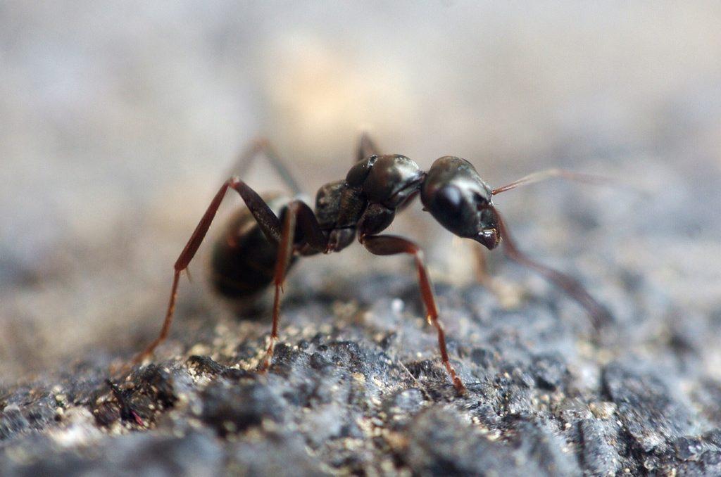 Ameisen mit Gewürzen vertreiben