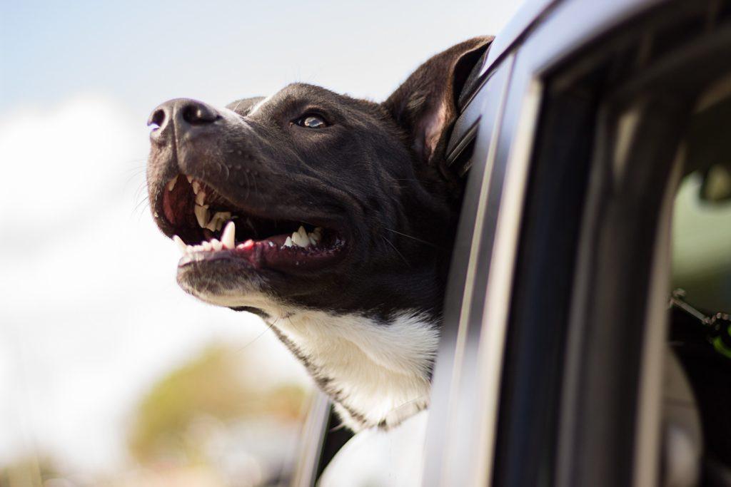 Hund sicher im Auto transportieren